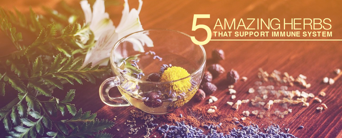 5 Amazing Herbs Support Immune System