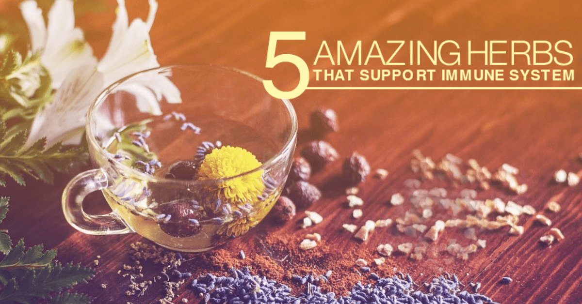 5 Amazing Herbs That Support Immune System