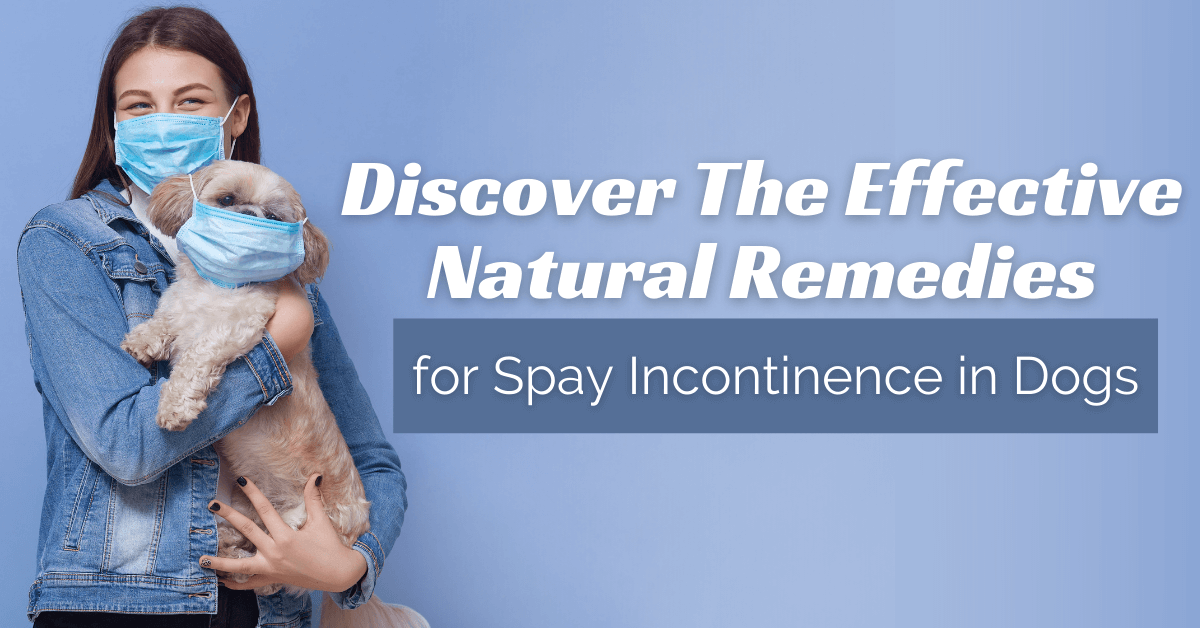 Discover The Effective Natural Remedies  for Spay Incontinence in Dogs