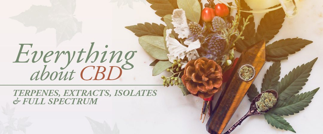 Everything About CBD: Terpenes, Extracts, Isolates & Full Spectrum