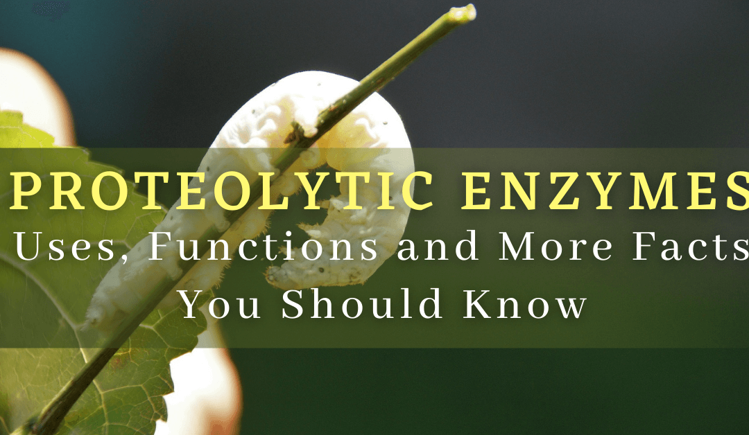 Proteolytic Enzymes: Uses, Functions and More Facts You Should Know