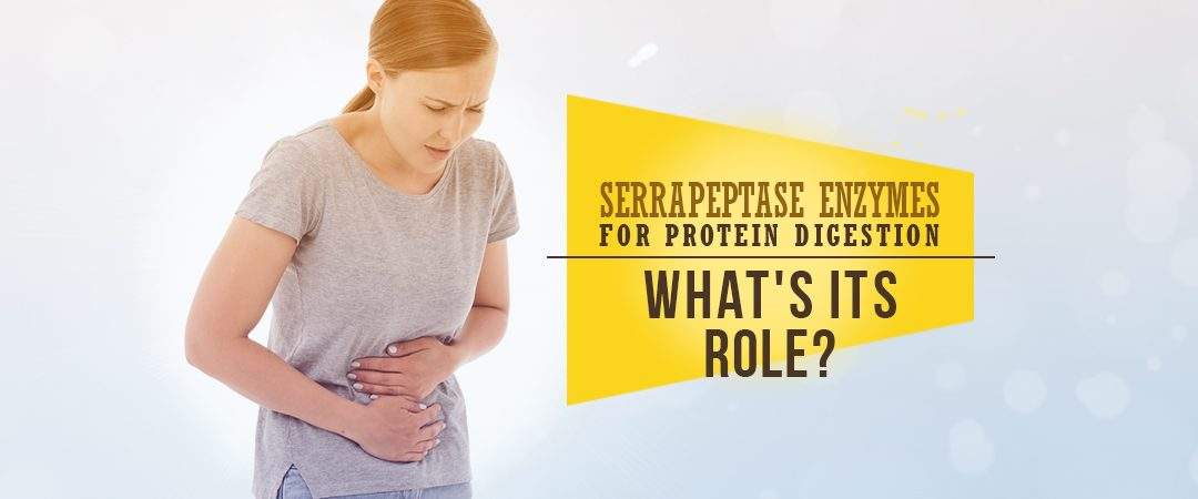 Serrapeptase Enzymes For Protein Digestion: What's Its Role?