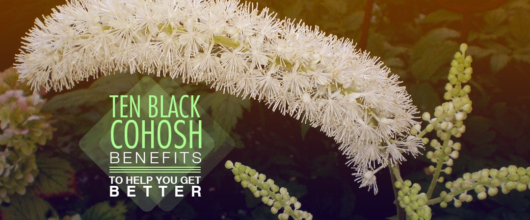 Ten Black Cohosh Benefits To Help You Get Better