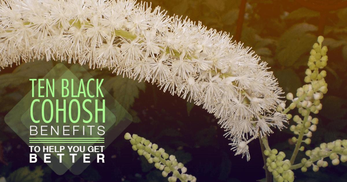 Ten Black Cohosh Benefits To Help You Get Better